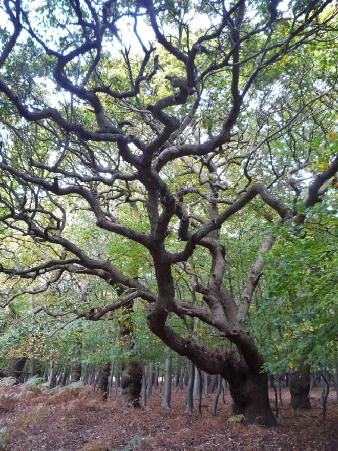 Oak © Joanna van der Hoeven 2014