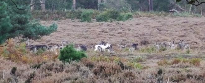 Fallow Deer Herd © Joanna van der Hoeven 2014