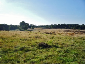 View of the heath from burial mound.