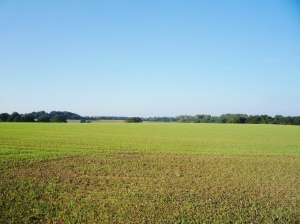 Site of Iron Age village, half a mile away from the burial mounds and sitting atop a hill, now a farmer's field.